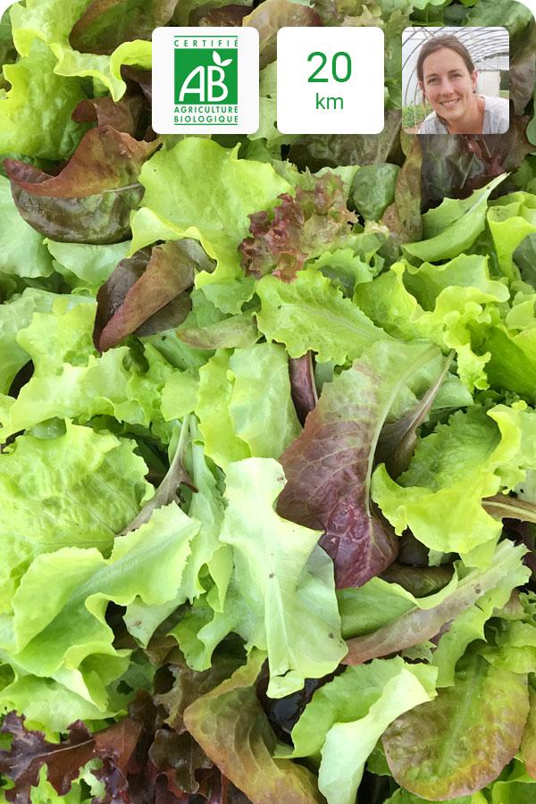 Mélange de salade bio