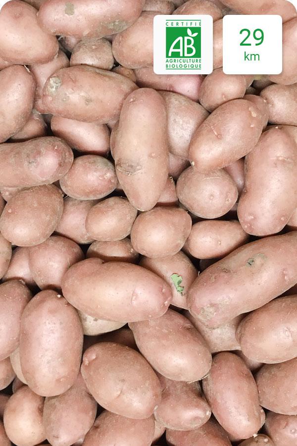 pommes de terre rosabella bio