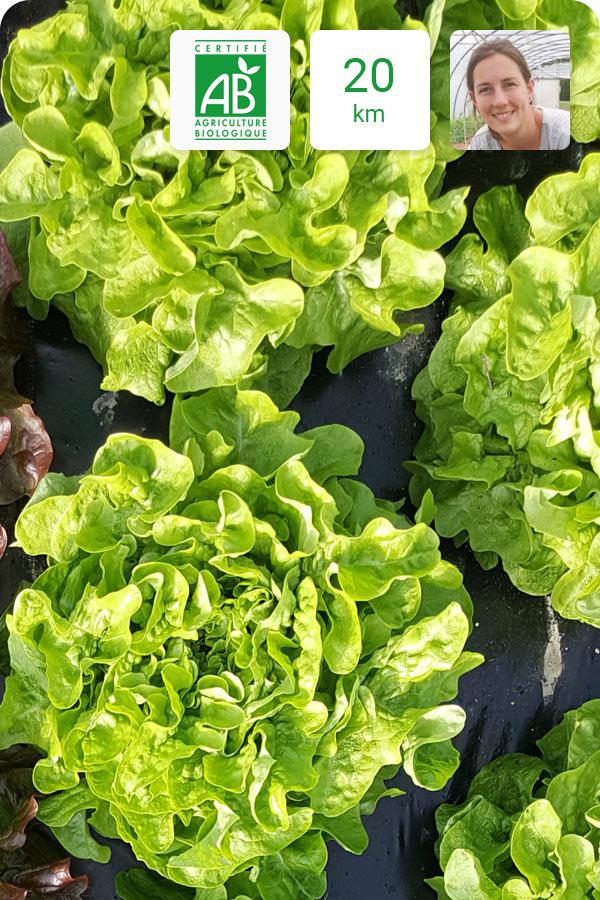 salade-bio-feuille_de_chêche_verte