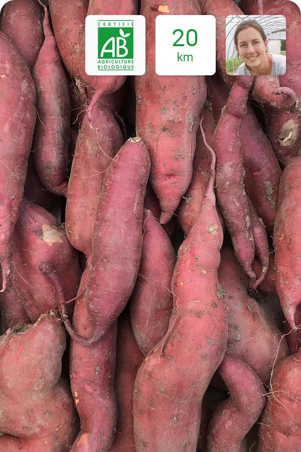 patate douce bio