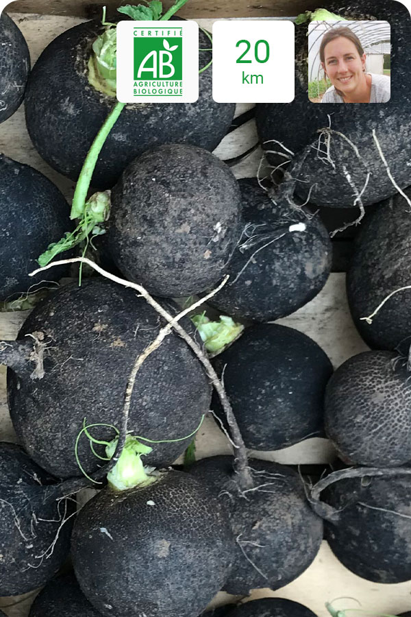 radis rond noir bio