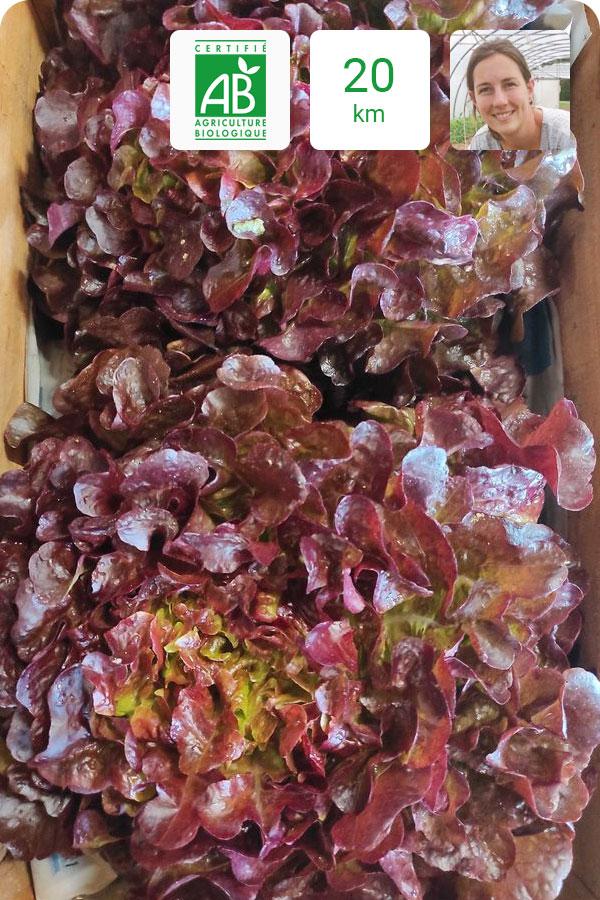 salade-bio-feuille_de_chêche_rouge